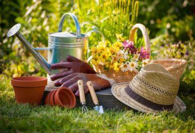 10 Conseils Pour Un Jardinage Écologique